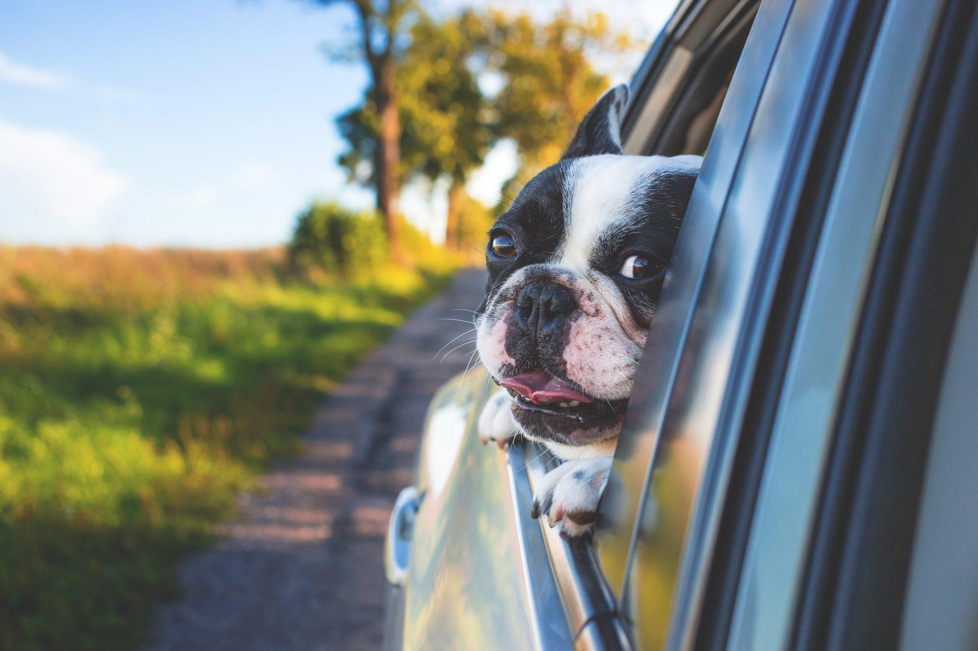 Movemydog.com